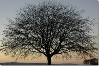 Tree-320